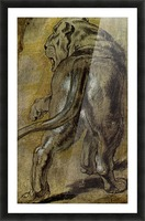 Lion by Rubens Picture Frame print