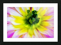 Pink Yellow Green  Picture Frame print