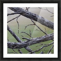 Branches Squared Picture Frame print