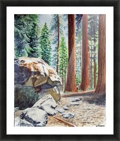 National Park Sequoia Picture Frame print