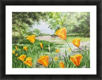 California Poppies Picture Frame print
