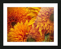 Fluffy Yellow Sunflowers Picture Frame print