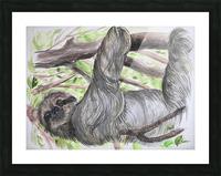 Collection COSTA RICA-Sloth Impression et Cadre photo