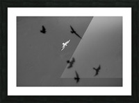 Bird and Shadows Picture Frame print
