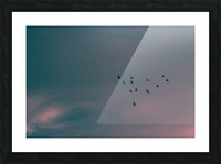 Flock of birds Picture Frame print