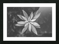 Symmetry of the nature Picture Frame print