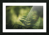 Green as the fern  Picture Frame print