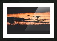 Heron hunt Picture Frame print