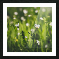White on green Picture Frame print
