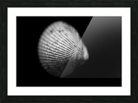 Series of shells  Picture Frame print