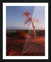 AdriaanPrinsloo 7215 Picture Frame print
