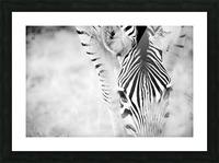 AdriaanPrinsloo 6718 Picture Frame print