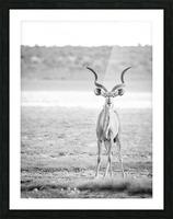 AdriaanPrinsloo 6071 Picture Frame print