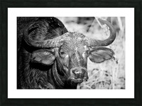 AdriaanPrinsloo 17077 Picture Frame print
