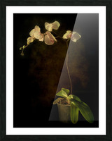 Orchid Picture Frame print