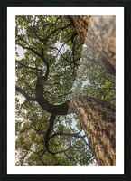 Resilience - Spiral Vertical Picture Frame print