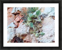 Cactus Picture Frame print