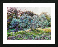 Colorful Olive Grove Picture Frame print