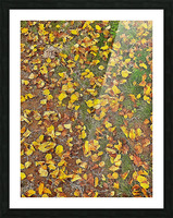 An Autumn Carpet Picture Frame print