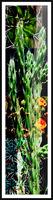 Neon Black Velvet Cactus 1 Picture Frame print