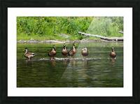 What the duck Impression et Cadre photo