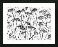 Silhouette of dried plants Picture Frame print