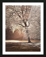 Autumn tree in sunlight Picture Frame print
