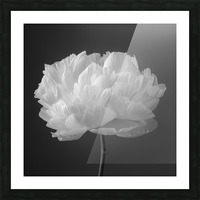 Peony flower Picture Frame print