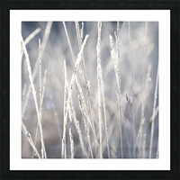 Frost on Grass Picture Frame print