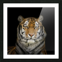 Tiger face Picture Frame print