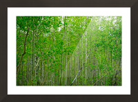 New Growth Picture Frame print