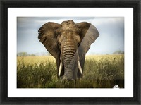 Encounters in Serengeti Picture Frame print
