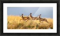 Tripple Jump by verdon   Picture Frame print