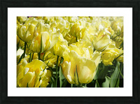 Tulips of the Netherlands 1 of 7 Picture Frame print