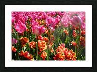 Pink & Orange Picture Frame print
