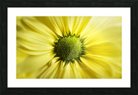 Yellow Daisy Picture Frame print