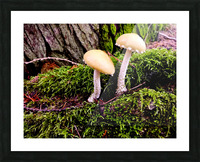 Tiny World 6 of 8 Picture Frame print
