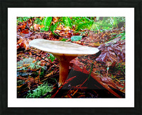 Tiny World 4 of 8 - Mushrooms and Fungi Picture Frame print