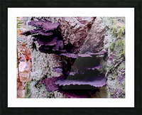 Tiny World 8 of 8 - Mushrooms and Fungi Picture Frame print