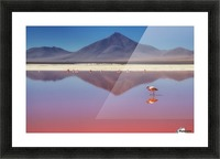 Pink Morning Picture Frame print