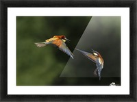 I do not Want You by Marco Redaelli  Picture Frame print
