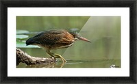 Wading Into The Unknown Picture Frame print