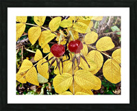 Two Red Berries Picture Frame print