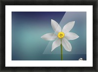 Flower of Paradise by Bess Hamiti  Picture Frame print