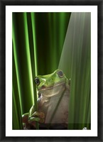 Green Frog Picture Frame print