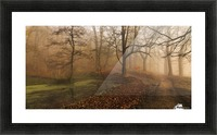 Which Path II Picture Frame print