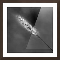 Epine Picture Frame print