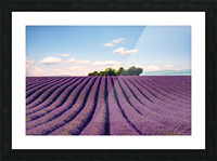 The Valensole plateau Picture Frame print