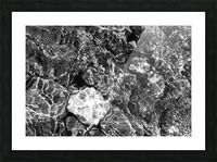 Water Colors ap 1776 B&W Picture Frame print