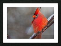 Cardinal ap 1866 Picture Frame print